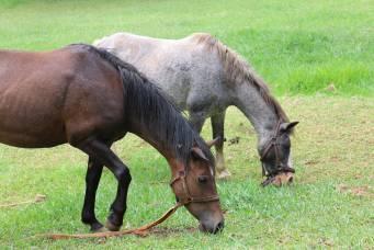 Ferien mit Pferden